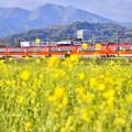 写真: 夕暮れの開成町 オレンジ色のロマンスカーGSEと黄色い菜の花(3)  20180407