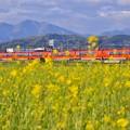 写真: 夕暮れの開成町 オレンジ色のロマンスカーGSEと黄色い菜の花(4)  20180407