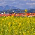 写真: 夕暮れの開成町 オレンジ色のロマンスカーGSEと黄色い菜の花(5)  20180407