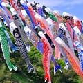 Photos: 大量の鯉のぼりが泳ぐ。。神流町鯉のぼりの里 20180430