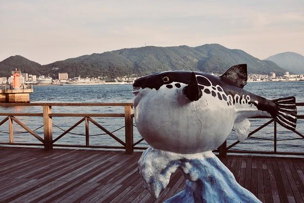 下関のフグ。。関門海峡を眺めて。。20180602