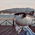 Photos: 下関のフグ。。関門海峡を眺めて。。20180602