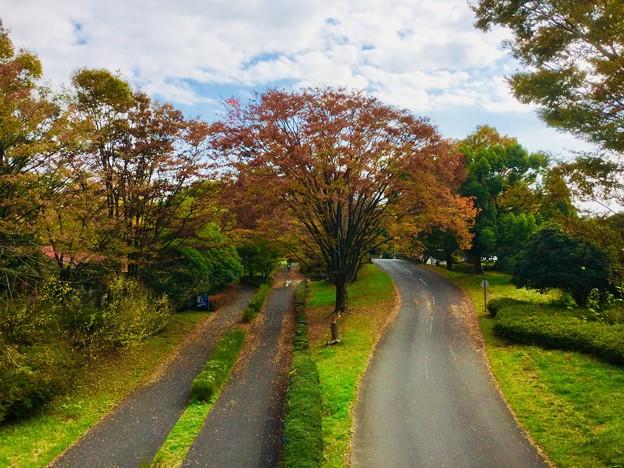 撮って出し。。色づき始めた昭和記念公園の紅葉 11月11日