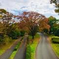 Photos: 撮って出し。。色づき始めた昭和記念公園の紅葉 11月11日