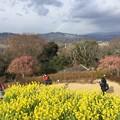 撮って出し。。富士山見えなかったけど満開の菜の花 1月20日