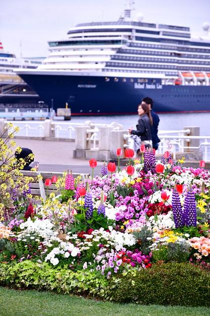 横浜山下公園散策。。お花と大型客船 20190414