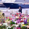 Photos: 横浜山下公園散策。。お花と大型客船 20190414