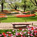 Photos: 撮って出し。。メルヘンな風景 昭和記念公園チューリップ(3)