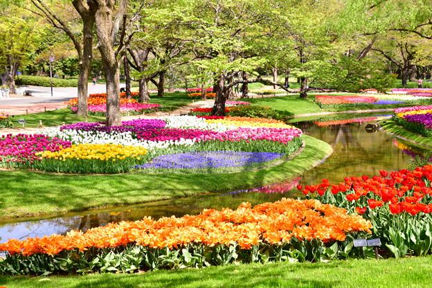 撮って出し。。メルヘンな風景 昭和記念公園チューリップ(4)