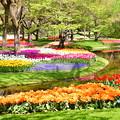 Photos: 撮って出し。。メルヘンな風景 昭和記念公園チューリップ(4)