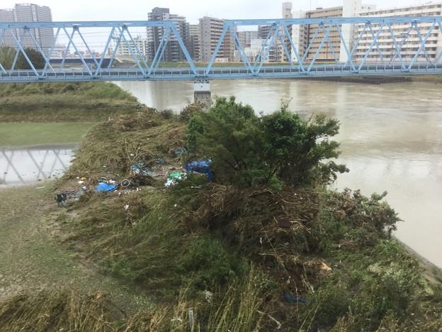 先日台風19号の爪跡。。川崎市多摩川河川敷。。荒地に 20191014