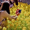 Photos: 20200223 三浦海岸河津桜 綺麗咲く菜の花