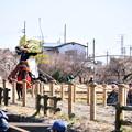 小田原曽我梅林で行われた流鏑馬(1)