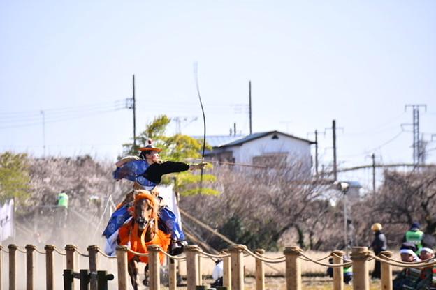 小田原曽我梅林で行われた流鏑馬(2)