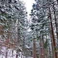 長野の地獄谷温泉郷へ向かう林道。。雪降る