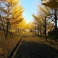 Photos: 20121201_153237