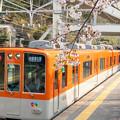 Photos: 須磨浦公園の桜・1