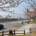 Photos: 須磨浦公園の桜・2