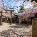 2019姫路神社の桜