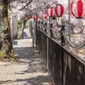 2019有馬温泉の桜・2