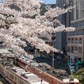 2019有馬温泉の桜・4