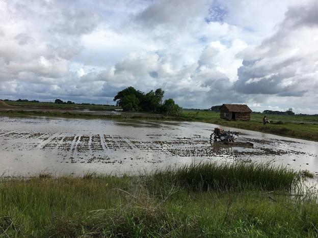 ヤンゴン川の川向う (5)