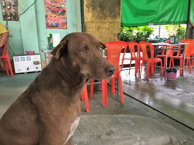泣き犬と外の光景 (1)