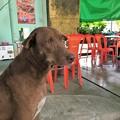 写真: 泣き犬と外の光景 (1)