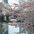 写真: 大岡川.都橋を望む