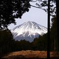 照片: 山宮浅間神社 静岡県富士宮市