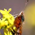 写真: 春の日