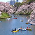 Photos: 江戸城お堀端散歩