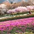 写真: 春景色