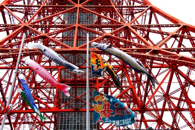写真: 東京タワー333匹の「鯉のぼり」と巨大「さんまのぼり」2018