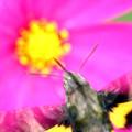 写真: 虫目線
