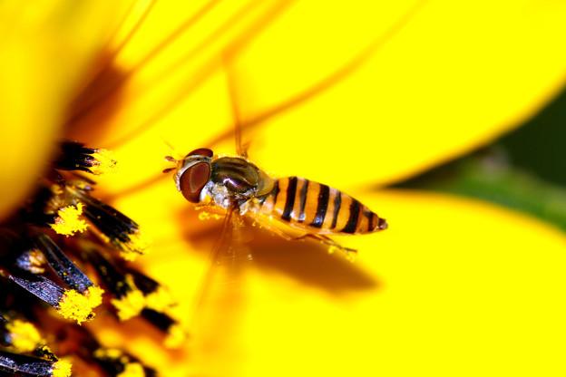 写真: コスモスの花の中