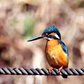 写真: Blue Bird