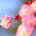 Photos: 春間近
