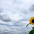 曇りがちな夏