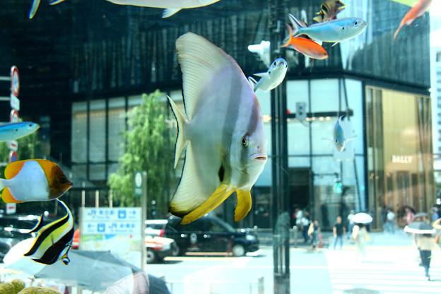 Photos: 銀座の水族館