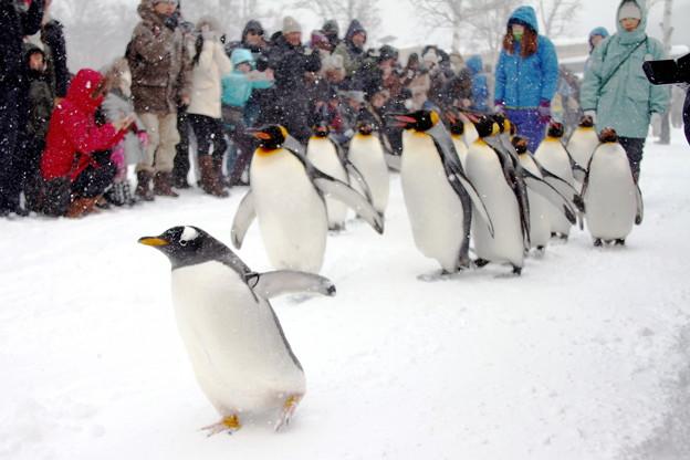 吹雪の旭山動物園