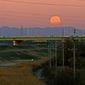 Photos: 月食を終えて沈む月
