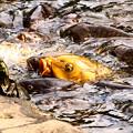 Photos: 鯉の群れとカメ