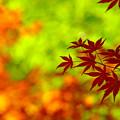 Photos: 重なる季節
