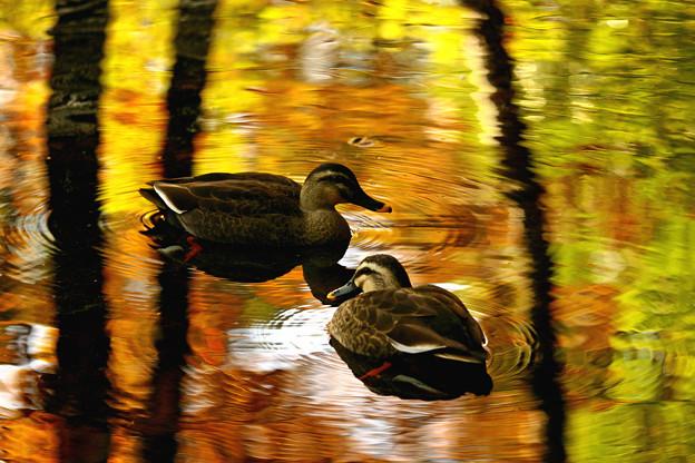 秋を告げる池