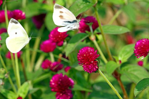 Photos: 花壇を訪れたカップル
