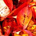 Photos: 色づく秋