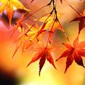 Photos: 北陸の秋