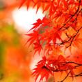 都内の紅葉