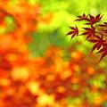 鮮やかな自然色